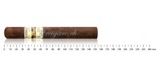 The Traveler Dubai maduro